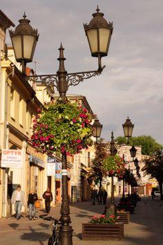 Flowers in Zielona Góra, Poland