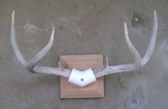 diy antler mount PVC (great idea) and then cover with leather would look good Deer Hunting Decor, Deer Decor, Hunting Stuff, Deer Skull Art, Deer Skulls, Antler Crafts, Antler Art, Antler Mount, Deer Mounts