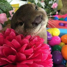 The pretties otter ever!