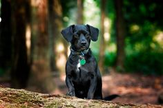 Zoey Portrait by Gord Rufh on 500px