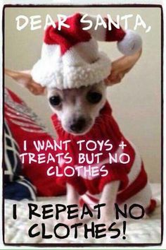 Poor dogs!! I have a Chi but she only wears sweaters and booties when it's cold.
