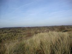 The dunes of Holland, one of my favorite places to go for a strole. Here you can still walk without meeting another soul.