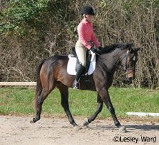 Dressage Mysteries Solved In part one of this two-part series, learn to get your horse on the bit the right way with Jane Savoie.