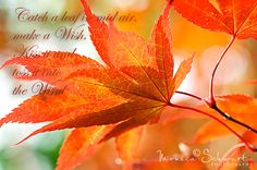 Celebrate the Autumn Equinox - Monday, September 22nd 2014 @ 7:29 pm PDT