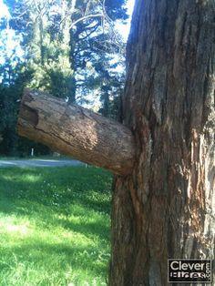 Tree/Stump Hides - fake tree branch