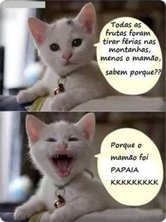Coisas da Vida: Veja algumas das piadas do gato do face mais hilárias Mais