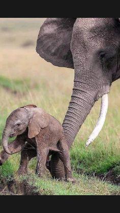 Cute Wild Animals, Rare Animals, Cute Funny Animals, Animals Beautiful, Cute Baby Elephant, Baby Elephants, Elephant Family, Elephant Photography, Animal Photography