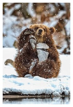 Cute bear cub playing in the snow.