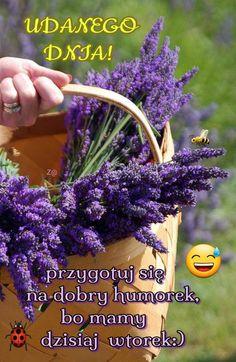 Good Morning Funny, Morning Humor, Herbs, Plants, Herb, Plant, Planets, Medicinal Plants
