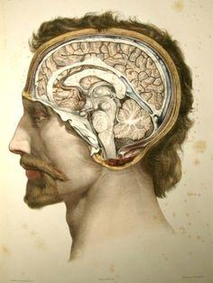 Traité complet d'anatomie de l'homme (1866-1871), 2nd ed.  by Bourgery, Bernard, and Jacob