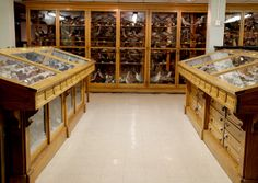 View of the Cabinets by Curious Expeditions, via Flickr