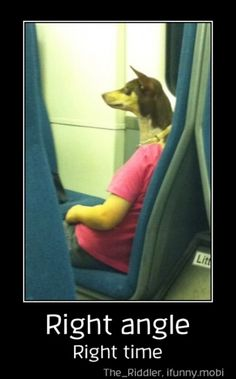 Right angle. Right time. #funny #hilarious #lol #funnydogs #dogmeme
