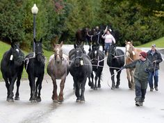 Arnold Transit Co. is proud to transport the Mackinac Island Carriage Tour horses! #mackinacisland #wintervacation