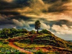 lone tree on hill  sunset dark clouds Promthep Cape Thailand imp