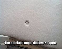 Cat + snow = NOPE