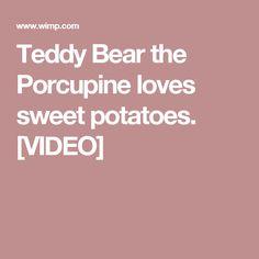 3f38656a9 Teddy Bear the Porcupine loves sweet potatoes. [VIDEO] Youtube Sensation,  Sweet Potato