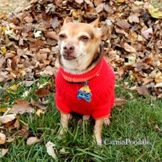 Scooby Doo In Red Sweater  #sponsored #BayerExpertCare