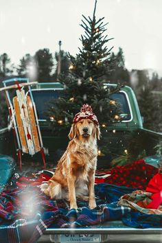 Dogs And Puppies Golden Retriever Doggies Ideas Cute Puppies, Cute Dogs, Dogs And Puppies, Doggies, Funny Dogs, Christmas Mood, Christmas Photos, Merry Christmas, Funny Christmas