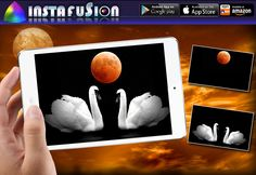 Fusion Blending App #swans #swanphotography #swanphotos #NaturePhotography #moon #moonphotography #light #night #bw #crop #Upload #multiple #Generate #adding #Designing #creating #merger #blending #typography #Download #photolayer #imagesgallery #rarepic #gallary #photogallary #exposure #galleries #Illustration  ----------------------  https://itunes.apple.com/app/id847293896