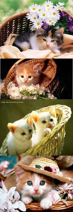 VISIT: https://www.facebook.com/KittensLoveForever/ http://look-how-cute-kittens-2.blogspot.com/