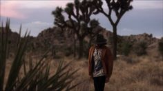 Angus Stone - Bird on a Buffalo I can listen to this song every day!
