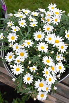 Only daisies. I love daises. That are such a happy flower!
