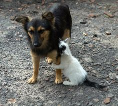 Don't leave me!  Oh, so cute, even doggies have to deal with child dependence and neediness of siblings...so so cute..