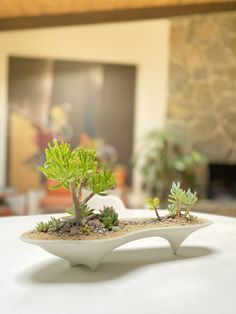 The Island Concrete Modern Planter is long centerpiece planter that is ideal for modern decor and mid-century design lovers. Unique and handmade, designed to enhance the texture and form of your succulent plants. Create your own mini island getaway. Succulent Bonsai, Planting Succulents, Long Planter, Plantas Bonsai, Mould Design, Modern Planters, Concrete Planters, Mid Century Modern Design, Decoration