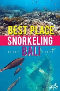 The ultimate best place for Snorkelling in Bali from the local point of view. I have compiled a list to experience best snorkelling places in Bali island!