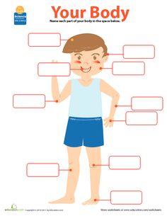 My Body | Lesson Plan | Education.com