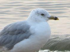 Gull Beach 11