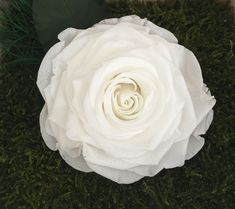 Beautiful gigantic white rose on a moss bed makes a special gift for a loved one. Contact us for info Preserved Flowers, Moss Art, How To Preserve Flowers, Nature Decor, How To Make Bed, Botanical Art, Wall Signs, White Roses, Preserves
