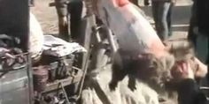 STOP CHINA Fillet: A News investigation has uncovered what appears to be the appalling treatment of animals being killed for their fur in China. The investigators filmed animals that were kicking and writhing as workers ripped their skin from their bodies. If the animals struggled too much, workers stood on the animals' neck or they beat the animals' heads with knife handles until the creatures stopped moving.