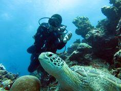 Meet the turtle