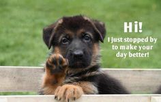 #hi #cute #funny #puppy #make #day #better