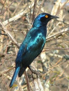 Birds of the Kruger National Park South Africa