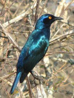 Birds of the Kruger National Park South Africa