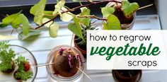 Explore plant science for kids with this fun indoor gardening activity that will get them regrowing vegetables scraps and turning garbage into food!