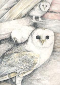 'Barn Owl Chicks' by lonestar62