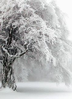 Russia, winter, cold, snow, trees, fuzzy or fluffy texture of the snow, white, brown, black,  ice, branches make a feathery or lacey texture when there's ice on them