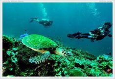 Scuba Dive Phuket Thailand #Scuba #Scubadiving #Phuket #Thailand #Scubatrip…