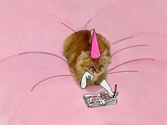 Princess Cat Diaries.