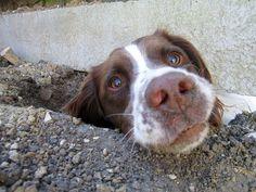 5 AMAZING NORTH CAROLINA PLACES TO TAKE YOUR DOG