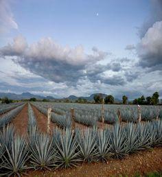 Jalisco se lanza a la aventura del turismo VIP