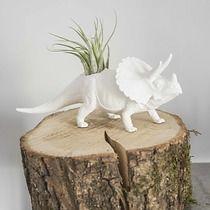 Biały Plantosaur Triceratops, Plantarium