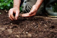 Mature man planting seeds, close-up - Roger Spooner/The Image Bank/Getty Images