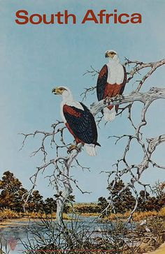 DP Vintage Posters - Original South Africa Travel Poster birds