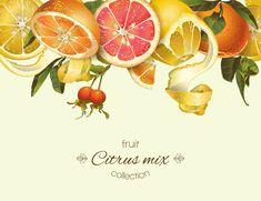Медово-цветочное. Вектор – 18 фотографий | ВКонтакте