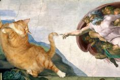 The Creation of cAt-dam