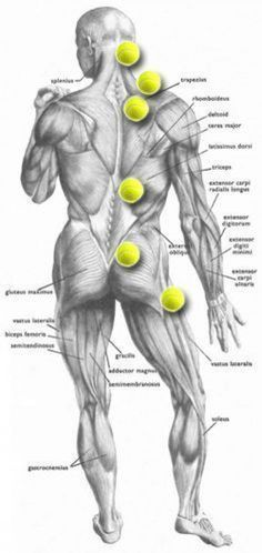 Tennis Ball Trigger Point Map Self massage Pnf Stretching, Psoas Release, Trigger Point Therapy, Trigger Point Massage, Sciatica Pain, Sciatic Nerve Relief, Sciatica Massage, Sciatica Stretches, Sciatica Symptoms